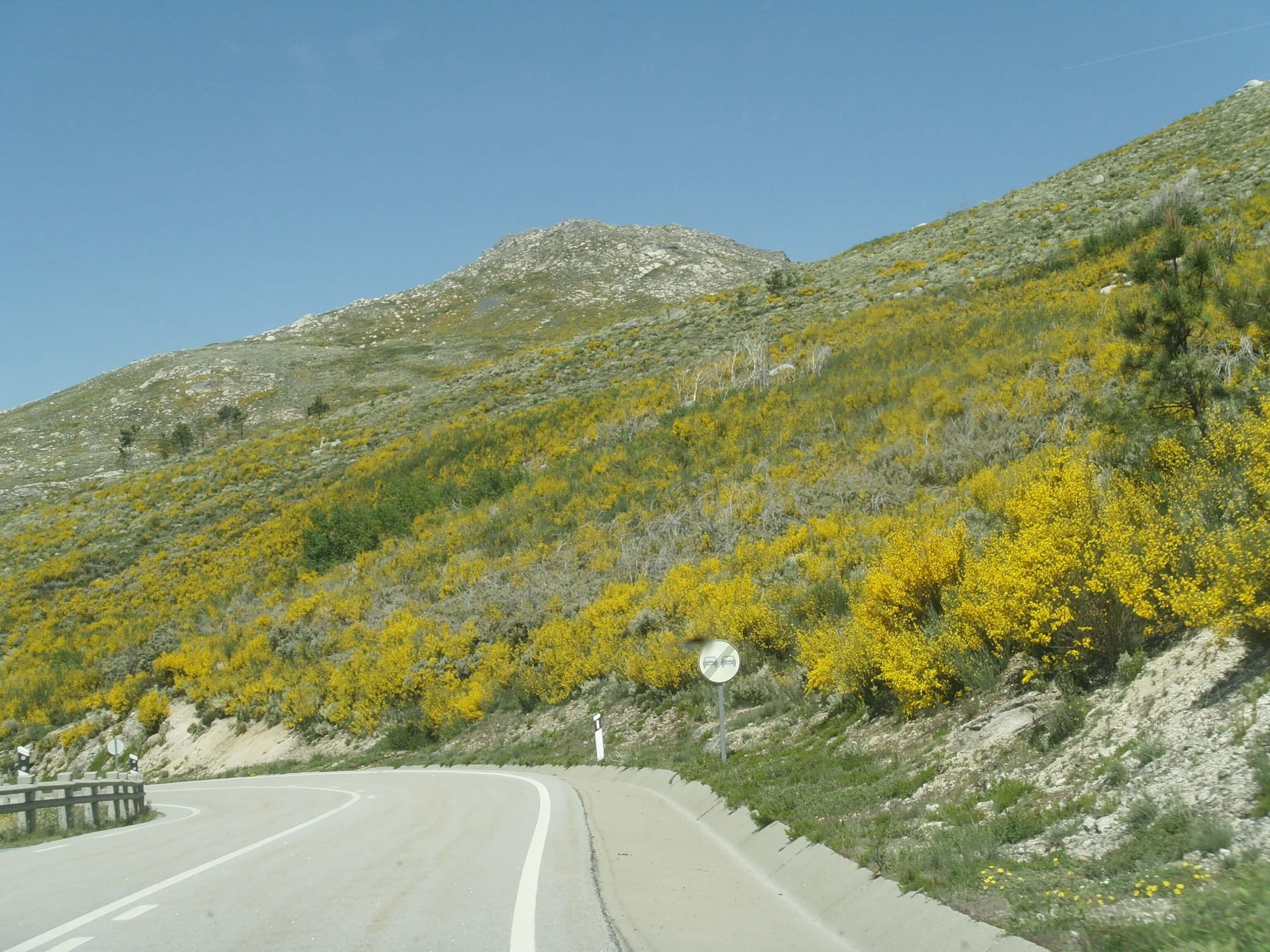 Motor bergweg