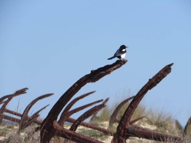 Algarve Praia de Barril (1)