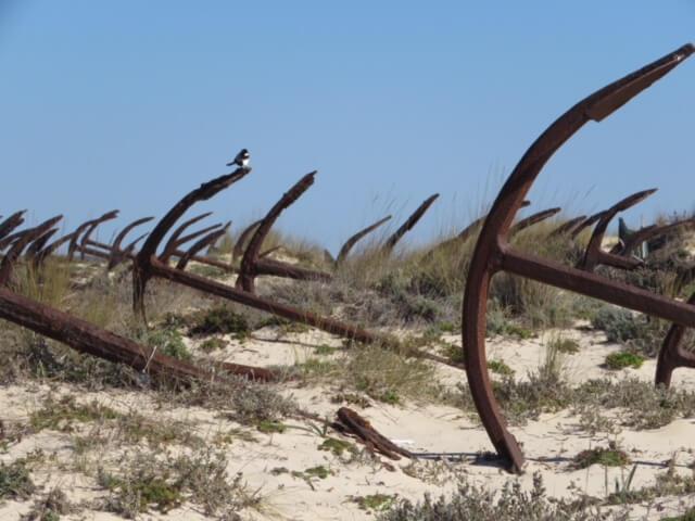 Algarve Praia de Barril (2)