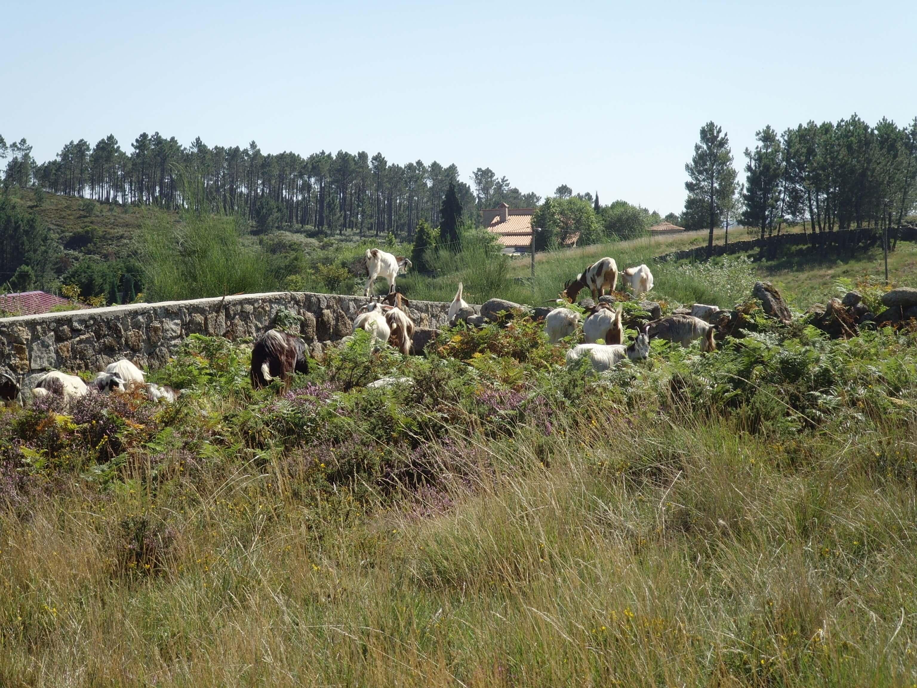 Cepelos - Vale de Cambra (9)